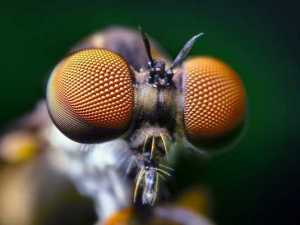 насекомые 002