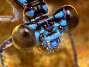 насекомые 016
