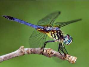 насекомые 017