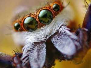насекомые 019