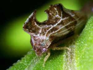 насекомые 018