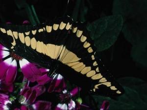 насекомые 043