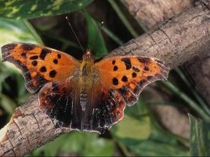 насекомые 044
