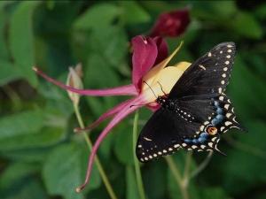 насекомые 046
