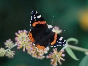 насекомые 051