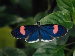 насекомые 052
