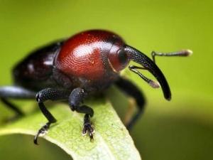 насекомые 056