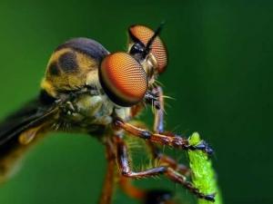 насекомые 059