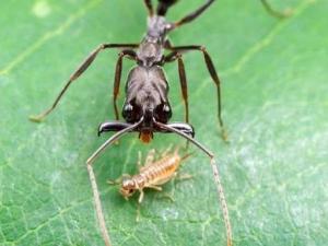 насекомые 067