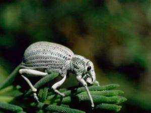 насекомые 076